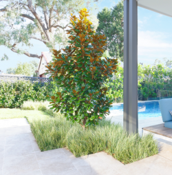 Landscapers Panania Sydney